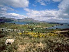 Bere Island West Coast Of Ireland, County Cork, Mountain Range, Travel Information, River, Island, Spaces, Mountains, Block Island