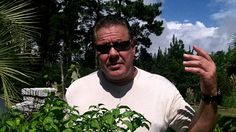 Overwintering Your Pepper Plants. Enjoy peppers all year long. Pruning y...