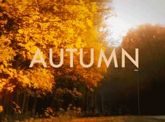 "The word ""autumn"" is clearly the most elegant way to describe a season. It even sounds beautiful. 