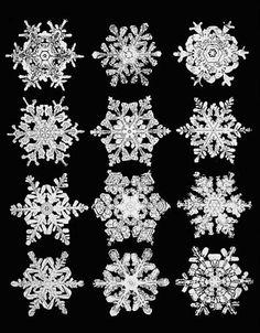 """Wilson Bentleys Lebenswerk """"Snow Crystals"""" (1931)"""