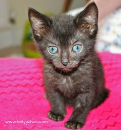 black kitten illustrating story about the problem of being a black cat Black Cat Appreciation Day, Stories For Kids, Funny Stories, Fur Babies, Kitten, Creatures, Children, Cats, Animals