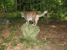 Cat on a tombstone in the Pet Cemetery   Flickr - Photo Sharing!