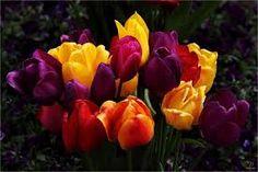 Bildergebnis für flowers of the world images