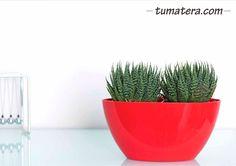 Jardinera de forma ovalada, con un diseño elegante y moderno. Encuentralas en: http://www.tumatera.co/products/mpa-221311-barca/