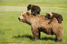 Mom and cubs <3<3<3