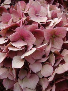 *Kullerbü*: Flower Weeks