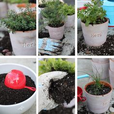 Your own Indoor Herb Garden?! #thesoapdish #herb #garden -- Put rocks that are slightly bigger than the hole in the bottom of the pot to help drainage.