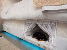 Slumber Party!: Bed Frame With Integrated Pet Bed