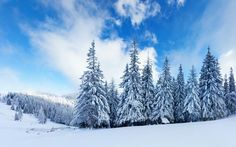 Winter Backgrounds For Desktop Wallpapers) – Free Backgrounds and Wallpapers Winter Desktop Background, Winter Wallpaper Hd, View Wallpaper, Winter Szenen, Winter Trees, Winter Christmas, Winter Images, Winter Pictures, Best Nature Wallpapers