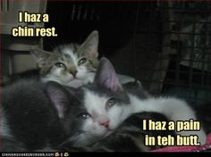 """@Angie Hathaway - You're the """"chin rest""""; I'm the """"pain in teh butt"""".  :)"""