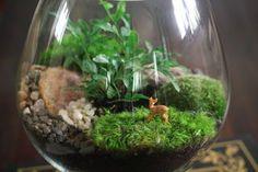 Guide de création d'un terrarium de plantes