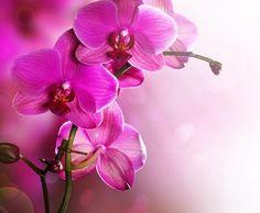 Назад Купить фотообои Малиновые орхидеи на заказ в Украине!