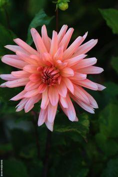 Flower 38 by Mohammad Azam