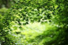 """""""Shades of Green"""" by Ken Shimo, via 500px."""