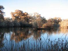 Rio Grande Nature Center State Park  #nature #abq #NM #riogrande