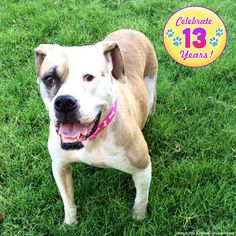 Celebrate 13 Years! Give $13 to Help Animals Today at The Animal Rescue Site
