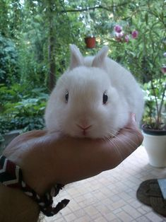 Little Bunny Fits in Owner's Hand Just Right | The Daily Bunny