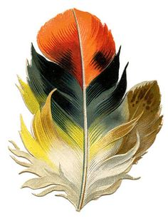 Antique Clip Art - Fabulous Feather - Autumn Tones - The Graphics Fairy