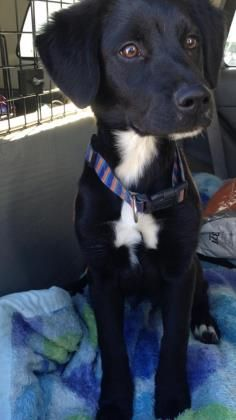 3 / 21 Petango.com – Meet Shadow, a 11 months 6 days Retriever / Mix available for adoption in ATCHISON, KS Contact Information Address 1801 Main Street , Unit, ATCHISON, KS, 66002 Phone (913) 367-5530 Email atchisonanimalcontrol@hotmail. com