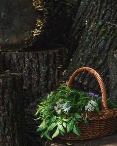 Basket full of fresh summer herbs. #garden #gardening #herbs #foodphotography