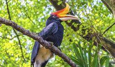 Istražite prirodne lepote Bornea/ Explore the natural beauty of Borneo Borneo, Bald Eagle, Wildlife, Creatures, Stock Photos, Illustration, Animals, Image, Natural Beauty