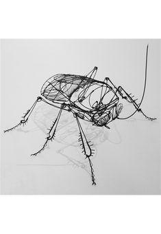 Crâne humain Jonathan chaillou. beetle