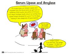 Nursing Mnemonics and Tips: Serum Lipase and Amylase Nursing Study Tips, Nursing Labs, Med Surg Nursing, Nursing Gifts, Nursing Board, Cardiac Nursing, Nursing Scrubs, Ob Nursing, Nursing Degree