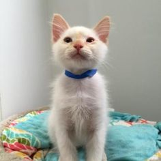 Joplin is available for adoption at our Pacific Heights campus!