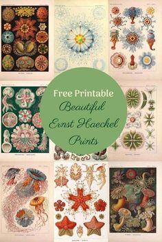 A fabulous collection of Ernst Haeckel prints both in colour and monochrome These Century marine life illustrations are like great works of art naturalhistoryposters ernsthaeckel is part of Printable butterfly wall art - Picture Boxes, Illustrator, Great Works Of Art, Free Printable Art, Free Printables, Wall Art Pictures, Wow Art, Free Prints, Botanical Prints
