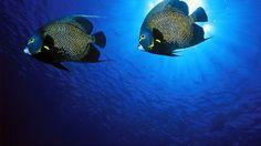 HD Underwater Widescreen Desktop Wallpapers | HD Underwater World wallpaper image 1366x768 widescreen hd wallpaper ...