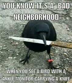 Crow will shank you!