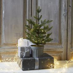 Christmas by The White Company