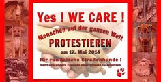 Yes We Care  Info : https://www.facebook.com/237458823392/photos/a.10152203921068393.1073741836.237458823392/10152203921078393/?type=1&theater     #Tierschutz #Tiere #Tierrettung #Rumänien #Notfall #Strays #Tierheim #Shelter #Europa #EBW #StopKillingDogs