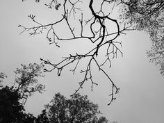 The dead and living / branches coexist until / stormy falling out.