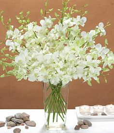 Beautiful Flowers or Plants - White Dendrobium Orchids