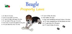 Puppy Dexter and his beagle laws