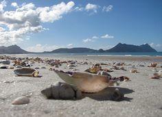 so many happy memories. Kiwiana, New Zealand, Beaches, Scenery, Heaven, Ocean, Memories, History, World