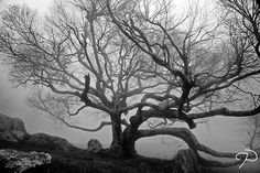 Black & white photography - I love trees