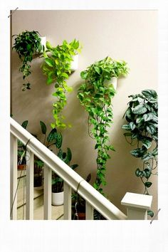 Indoor Gardens For Your Home Room With Plants, House Plants Decor, Plant Rooms, Easy House Plants, Indoor Plant Wall, Indoor Plants, Wall Garden Indoor, Plant Wall Diy, Hanging Plants Outdoor