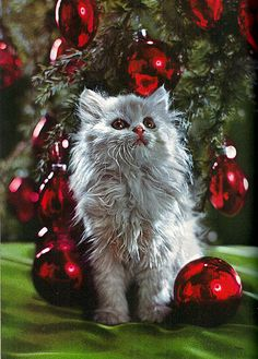 Christmas kitten photo from Ideals magazine