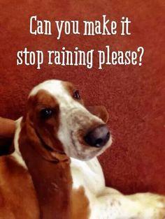 Basset...Divot hated the rain!