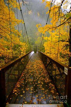 Autumn Bridge Crossing