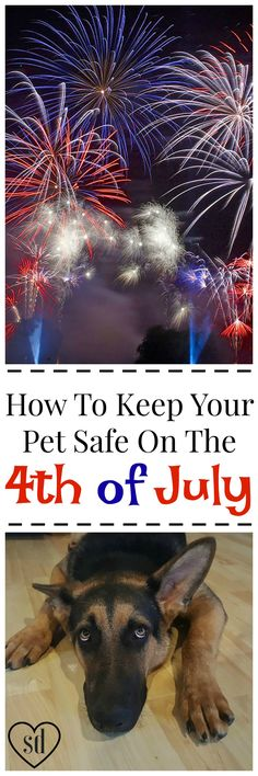 4th of July can feel like the end of the world to your dog. Protect them with these simple tips.