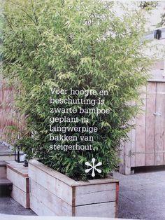 Bamboe voor lastige buren Rue Verte, Garden Yard Ideas, Concrete Garden, Outside Living, Rooftop Terrace, Garden Fencing, Fauna, Hedges, Garden Planning