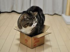 Maru, that box is too small for you