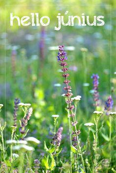 Hello június! Plants, Plant, Planets