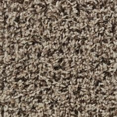 STAINMASTER�Active Family Carefree Easton Frieze Carpet Need to see in person for color.