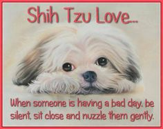 Shih Tzu love..... Looks like my baby