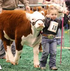 18 Adorable Cow Photos That Prove They Are Just Big Dogs - meowlogy Animals For Kids, Farm Animals, Animals And Pets, Cute Animals, Hereford Cattle, Mini Hereford, Show Cows, Cow Photos, Cow Pics