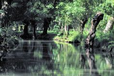 Spread over three departments (Vendée, Deux-Sèvres and Charente-Maritime), the Marais (marsh) Poitevin is an ideal location to walk in the shade of poplar, ash and willows. Navigation is performed there by boat and canoe, but the marsh is also ideal for hiking, biking or horseback.